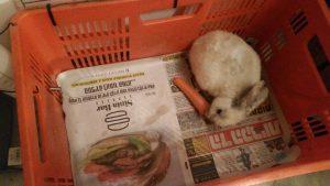ארנב בקופסא