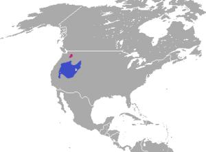 מפה של תפוצת ארנב ננסי