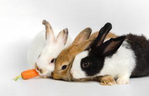 גידול ארנב בבית - ארנבים משחקים עם גזר