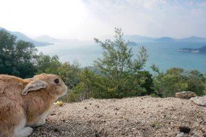 ארנב בטבע